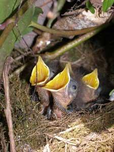 Starlings Nest